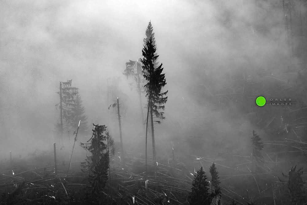 Un'immagine della devastazione di Vaia. Foto di Pierluigi Orler